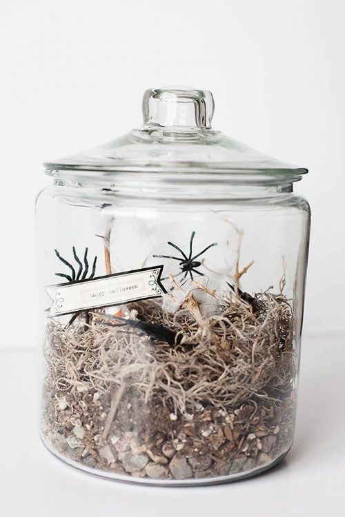 kids' spider terrarium (via allfortheboys)