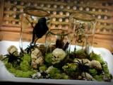Halloween moss terrarium