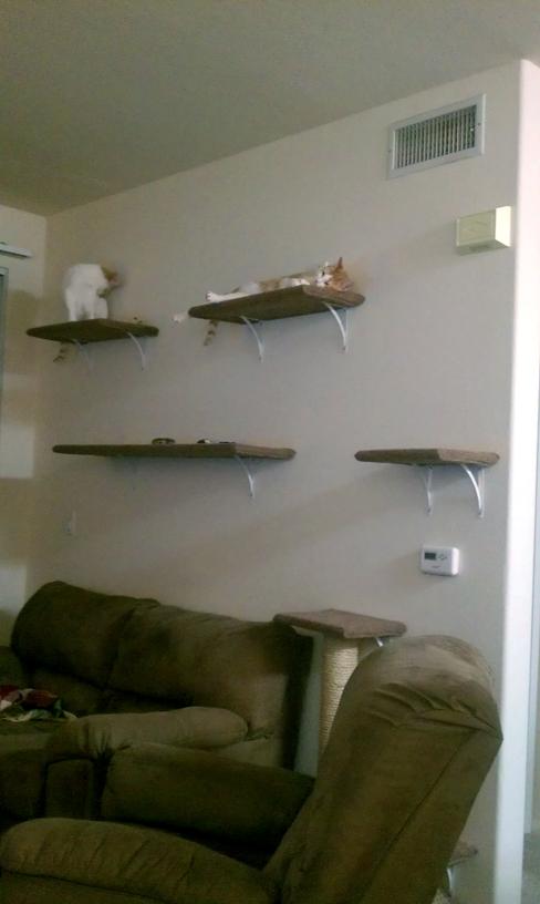 wall mounted cat tree (via imgur)