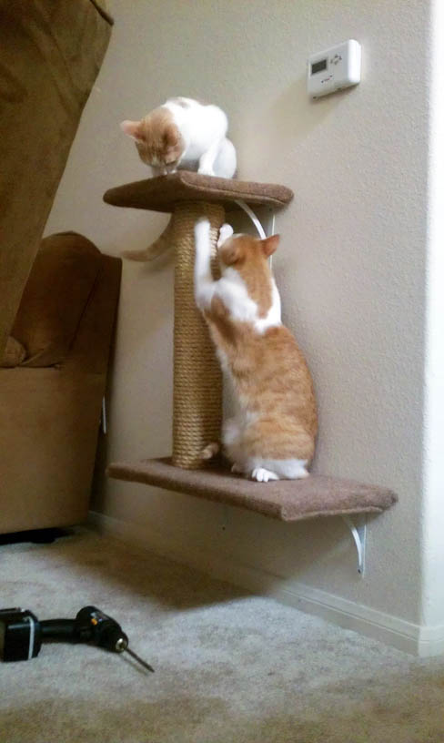 Pallet Furniture Inspirations From Bochum Ehrenfeld additionally 3 Diy Cat Toys moreover 9 Simple Diy Cat Trees To Spoil Your Kitty furthermore Diy Driftwood Cat Tree additionally 414331234439629589. on diy cat scratching post