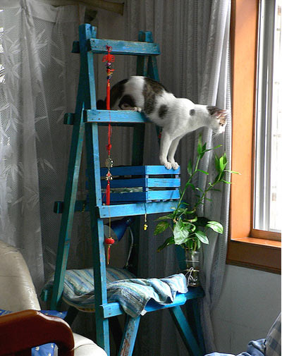 cheap cat tower (via pawesome)