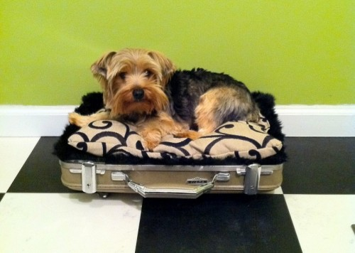 vintage suitcase dog bed (via )