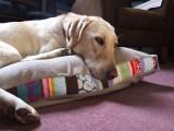 scrappy dog bed