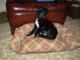recycled skirt pet bed