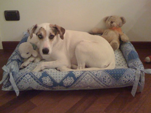 chic pet bed