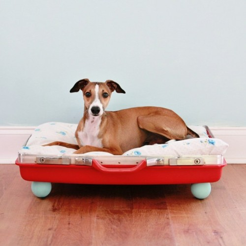red suitcase dog bed