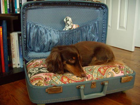diy suitcase dog bed (via designsponge)