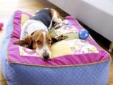 dog wrap pillow