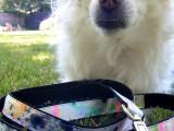 splatter paint dog leash