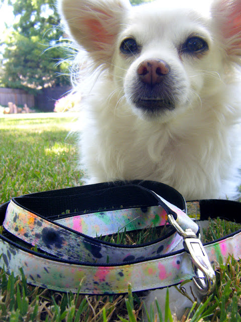 15 Colorful And Simple To Make Dog Leashes