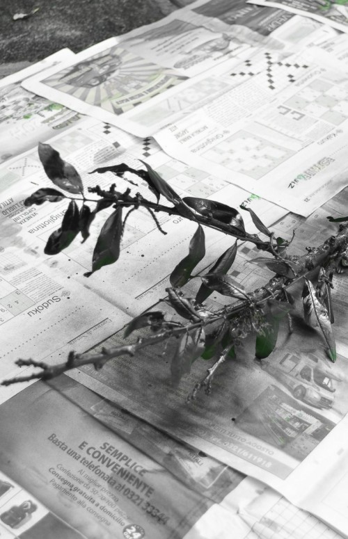 Stylish DIY Halloween Branch Table Centerpiece