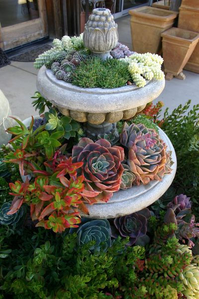 Succulents Garden Ideas colorful succulent garden design Succulent Garden Ideas