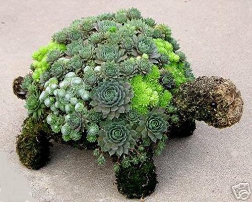70 indoor and outdoor succulent garden ideas shelterness - Cool succulent plants ...