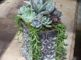 Succulent Garden Ideas