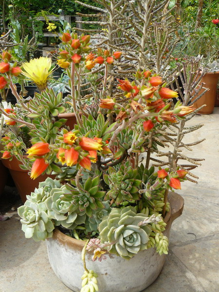 70 Indoor And Outdoor Succulent Garden Ideas Shelterness