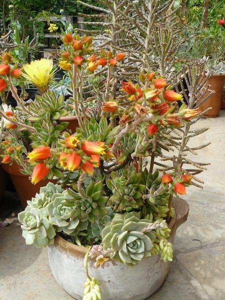 35 Indoor And Outdoor Succulent Garden Ideas Shelterness