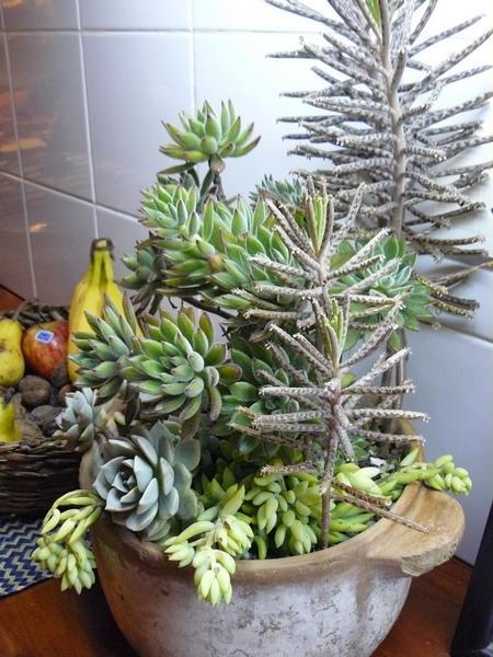 70 Indoor And Outdoor Succulent Garden Ideas Shelterness