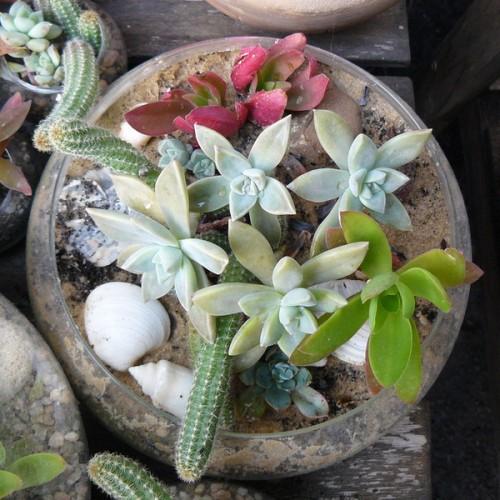 Succulent Garden Ideas: 70 Indoor And Outdoor Succulent Garden Ideas