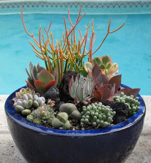 Succulents Garden Ideas find this pin and more on succulents cactus sedum Succulent Garden Ideas