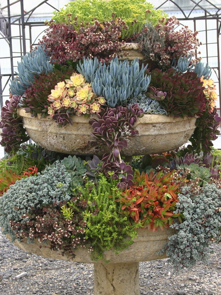 Captivating Succulent Garden Ideas