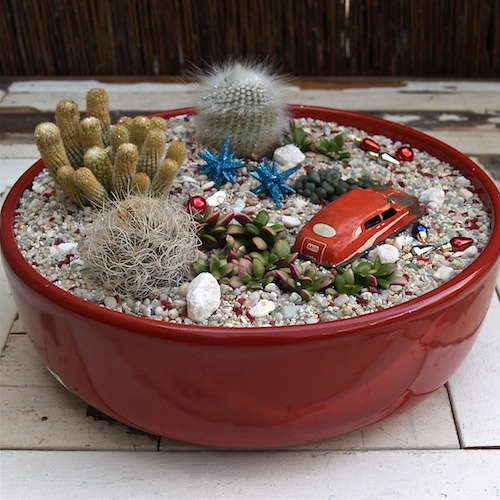 Succulents Garden Ideas succulent garden ideas Succulent Garden Ideas