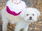 sweet-diy-cupcake-dog-costume-for-halloween-11