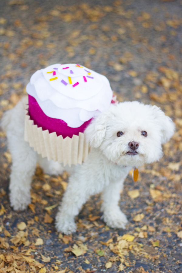 Picture Of sweet diy cupcake dog costume for halloween  11