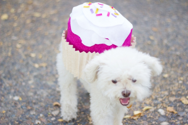 Picture Of sweet diy cupcake dog costume for halloween  2