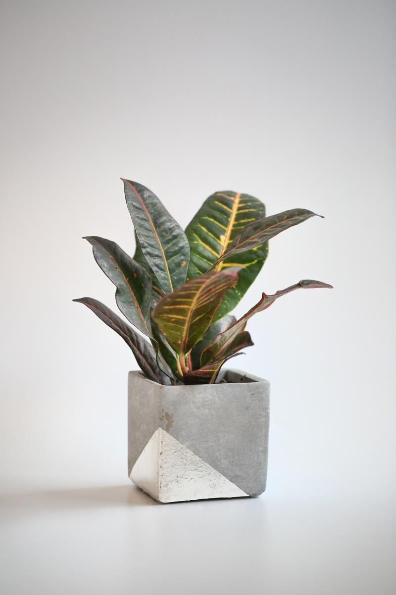 silver leaf planter