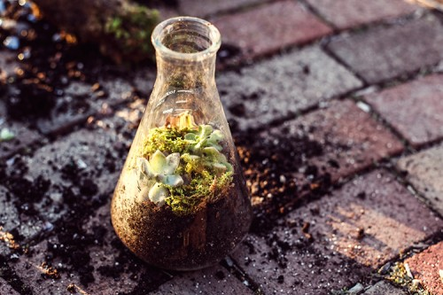 Unusual DIY Chemistry Flask Terrarium