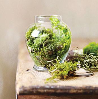 Using Mini Terrariums In Interior Decorating
