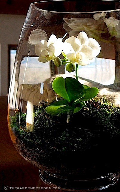 Picture Of Using Mini Terrariums In Interior Decorating