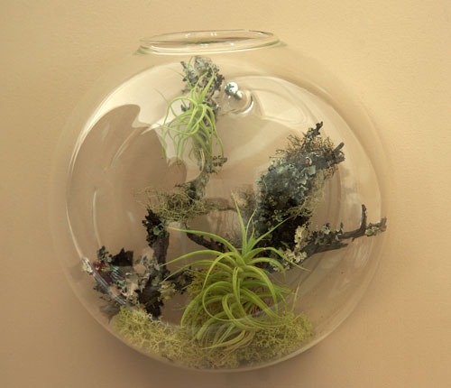 Wall Bubble Florarium