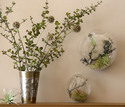 [تصویر:  wall-bubble-florarium-2.jpg]