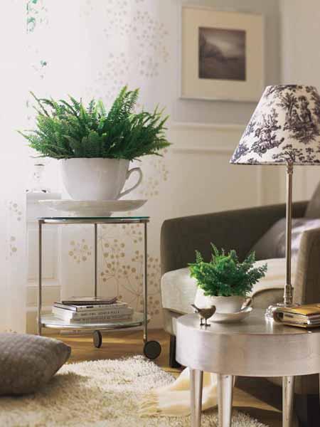 White Ceramic And Plants