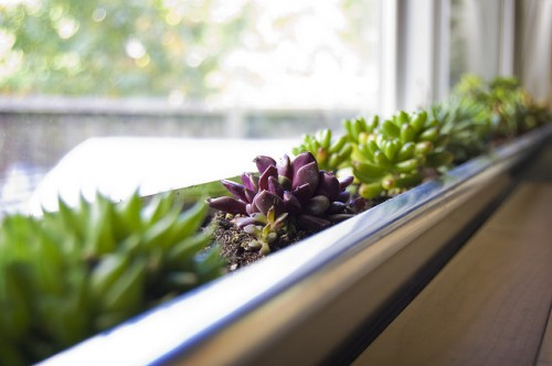 DIY Windowbox Succulent Planter (via shelterness)